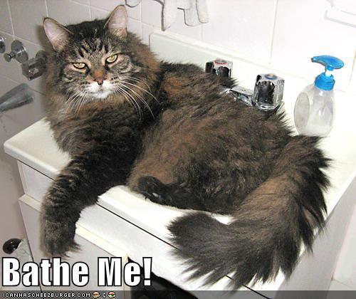 Bathe Me!
