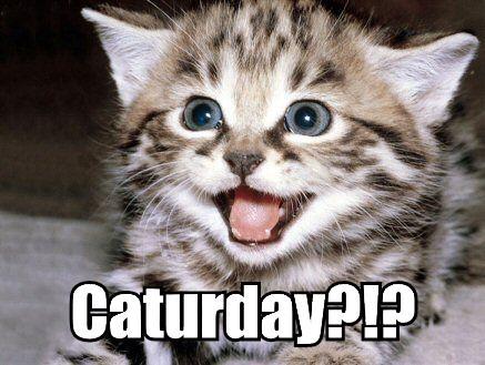 Caturday?!?