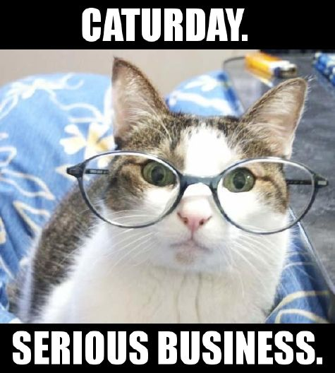 CATURDAY.  SERIOUS BUSINESS.