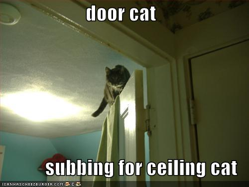 door cat subbing for ceiling cat