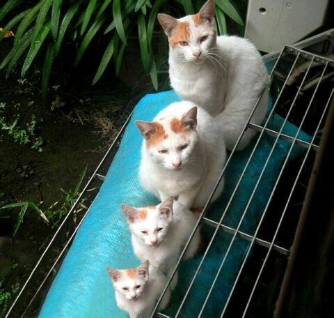 Four Cats Doin Somethin
