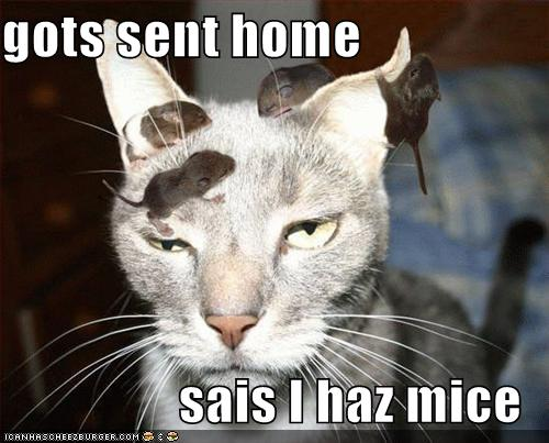 gots sent home sais I haz mice