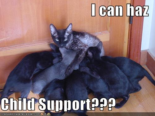 I can haz Child Support???