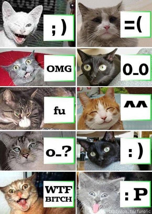skype smileys secret. Skype+emoticons+hidden+cat