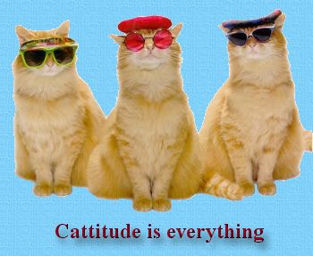 Cattitude is Everything