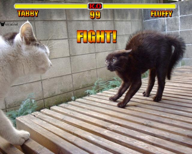 FIGHT! - lolcats
