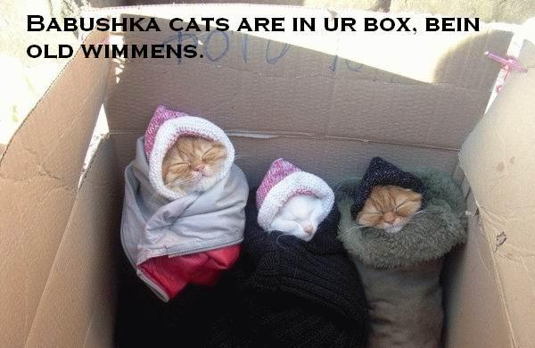 Babushka Cats Are in Ur Box Bein Old Wimmens