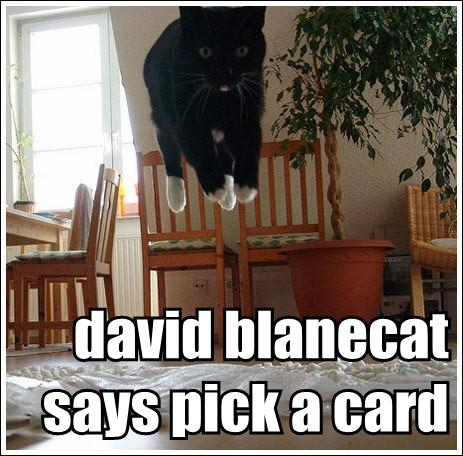 David Blainecat Says Pick a Card