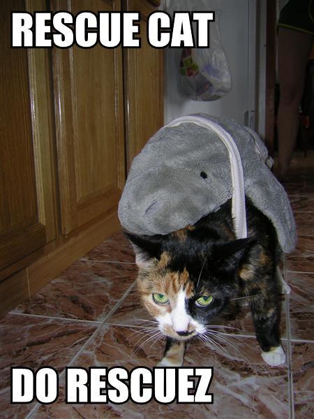 Rescue Cat