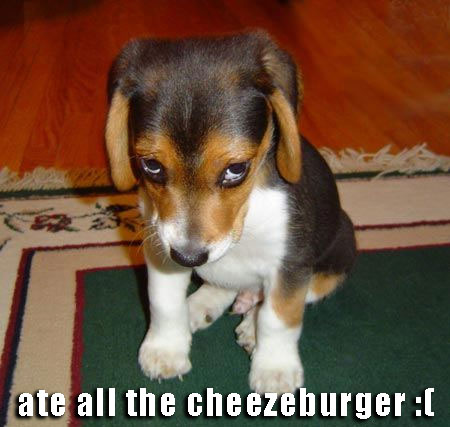 ate all the cheezeburger