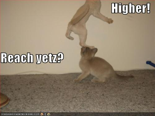 Higher Reach yetz - Funny Animal Pics