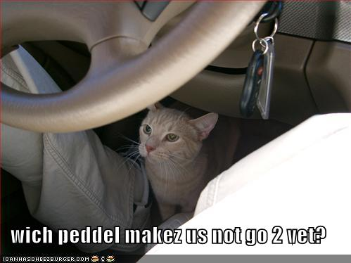 Wich peddel makez us not go 2 vet