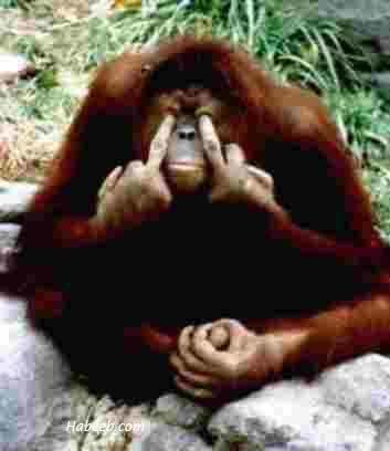 Sign Language Monkey