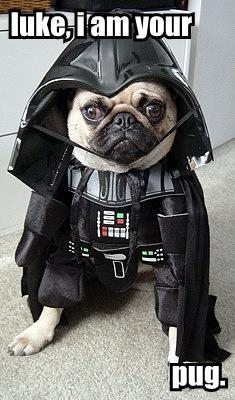 luke, i am your pug