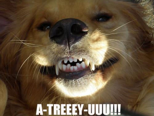 A-TREEEY-UUU!!!