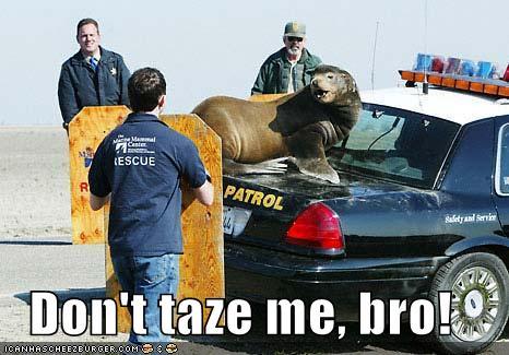 Don't taze me, bro!