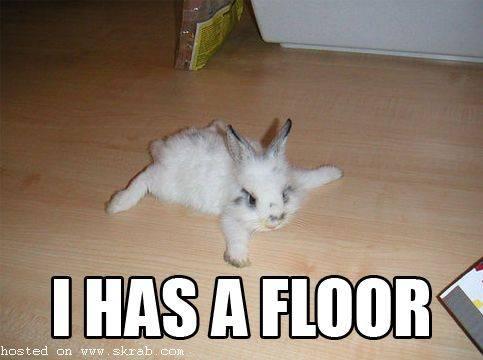 I HAS A FLOOR