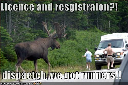 Licence and resgistraion dispactch, we got runners!!