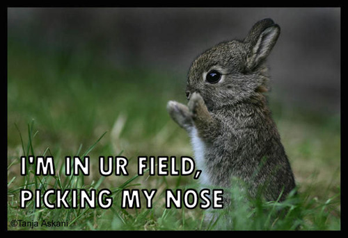 I'M IN UR FIELD, PICKING MY NOSE