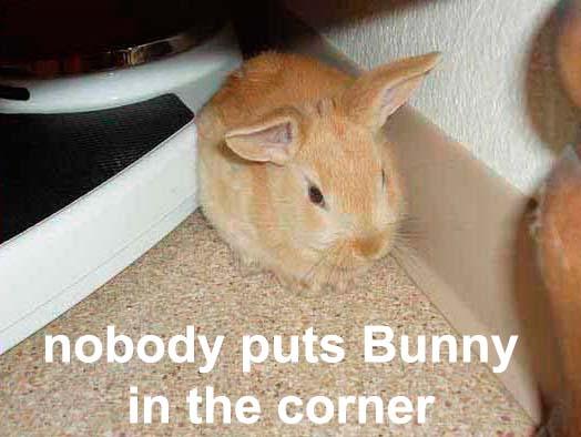 nobody puts bunny in the corner