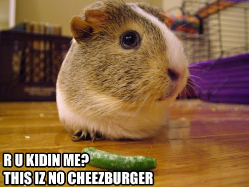 R U KIDIN ME THIS IZ NO CHEEZBURGER