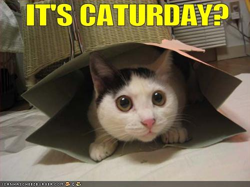 Its caturday