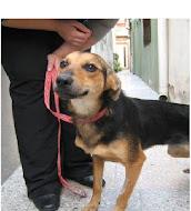 Urgente: Animalitos en adopción