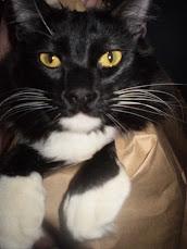 Calamity Sylvester