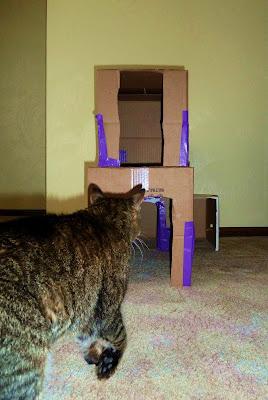 Kitty Condo Approach