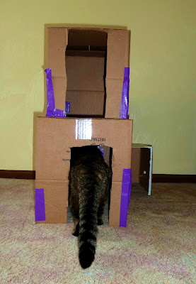 Kitty Condo Entry and Sniff
