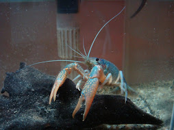 My Blue Cray~