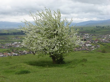 Primăvara, la Subcetate