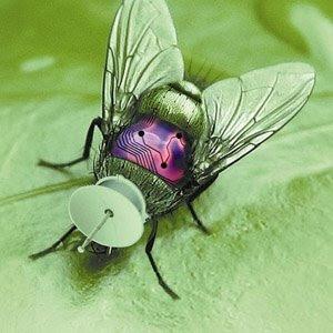 ผม เป็น คน ที่ ไม่ ชอบ แมลง