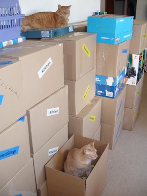 moving boxes with labels, and cats