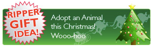 Adopt an animal this Christmas