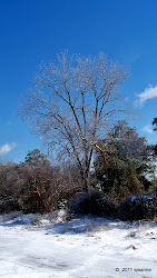 A fave tree across the tracks...