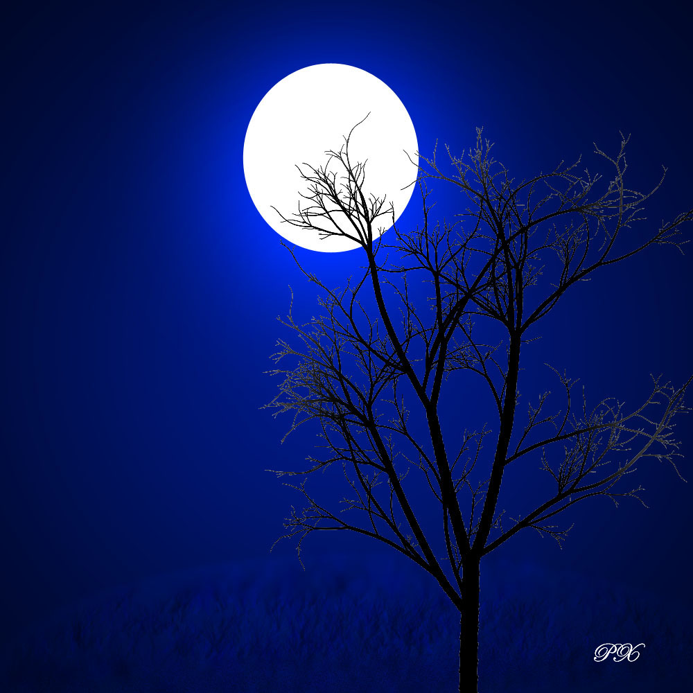 a moonlit night essay On such a moon-lit night i along with a few friends started for a long walk towards the river side when the moon bathes the whole earth with its balmy.
