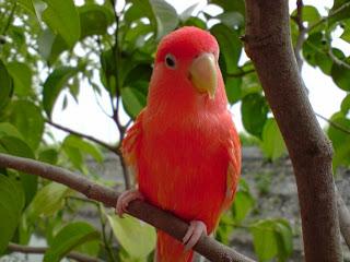 Lovebirdblogs: Lovebird