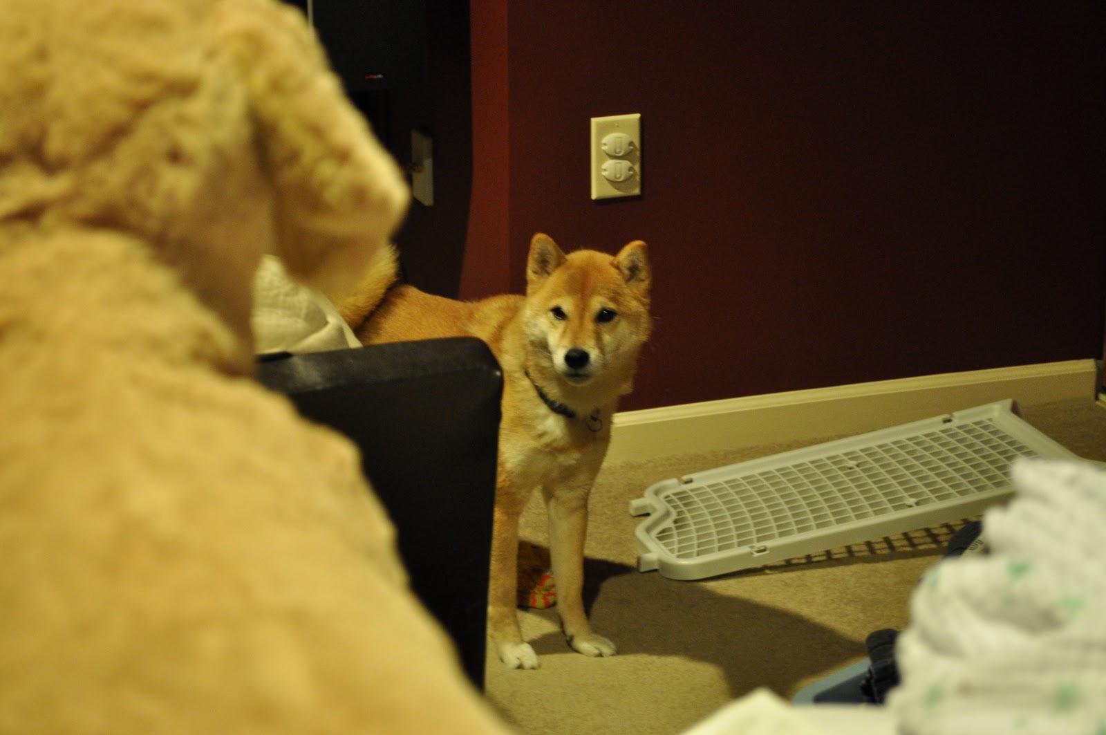 Intruder Barking Dog Alarm Uk Tyne