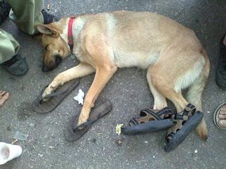 Немец се жалва, че му убили кучето в Кубрат