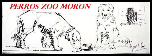 Perros Zoo Morón