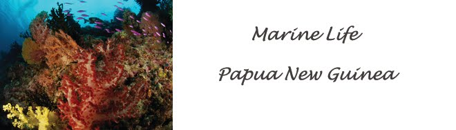 marine life PNG