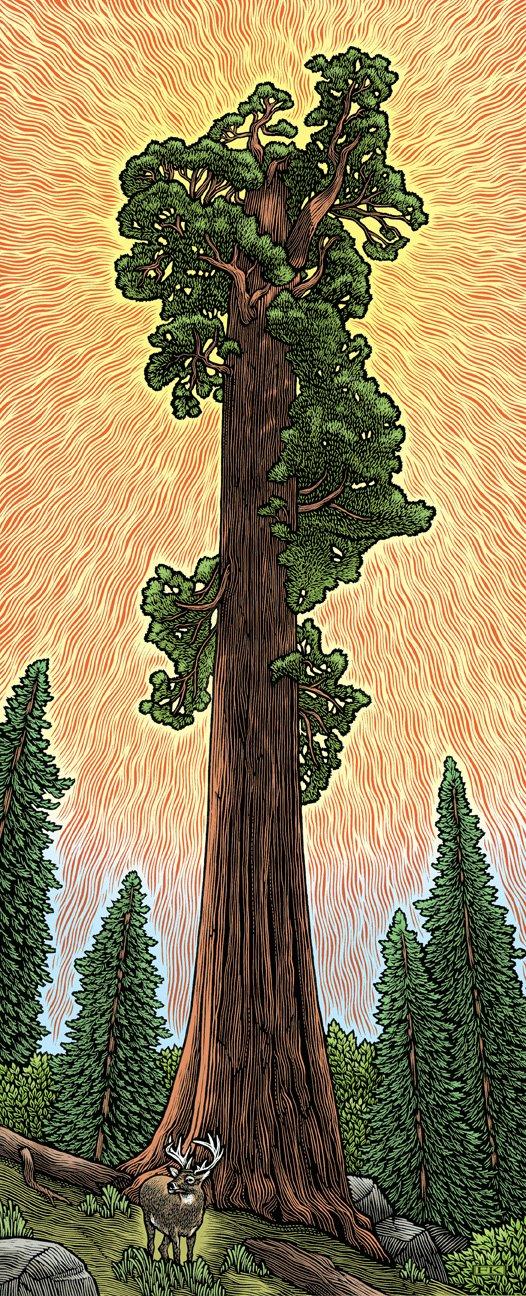 [Sequoia72.jpg]