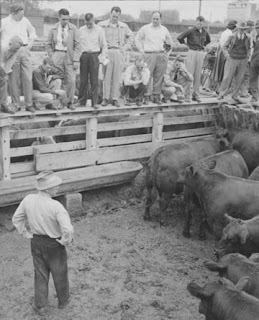 Students at the Sioux City Stockyards about the year I was born