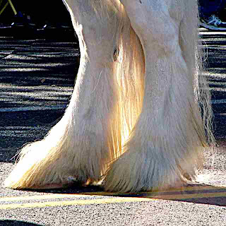 Rose Parade 2009 - Hooves