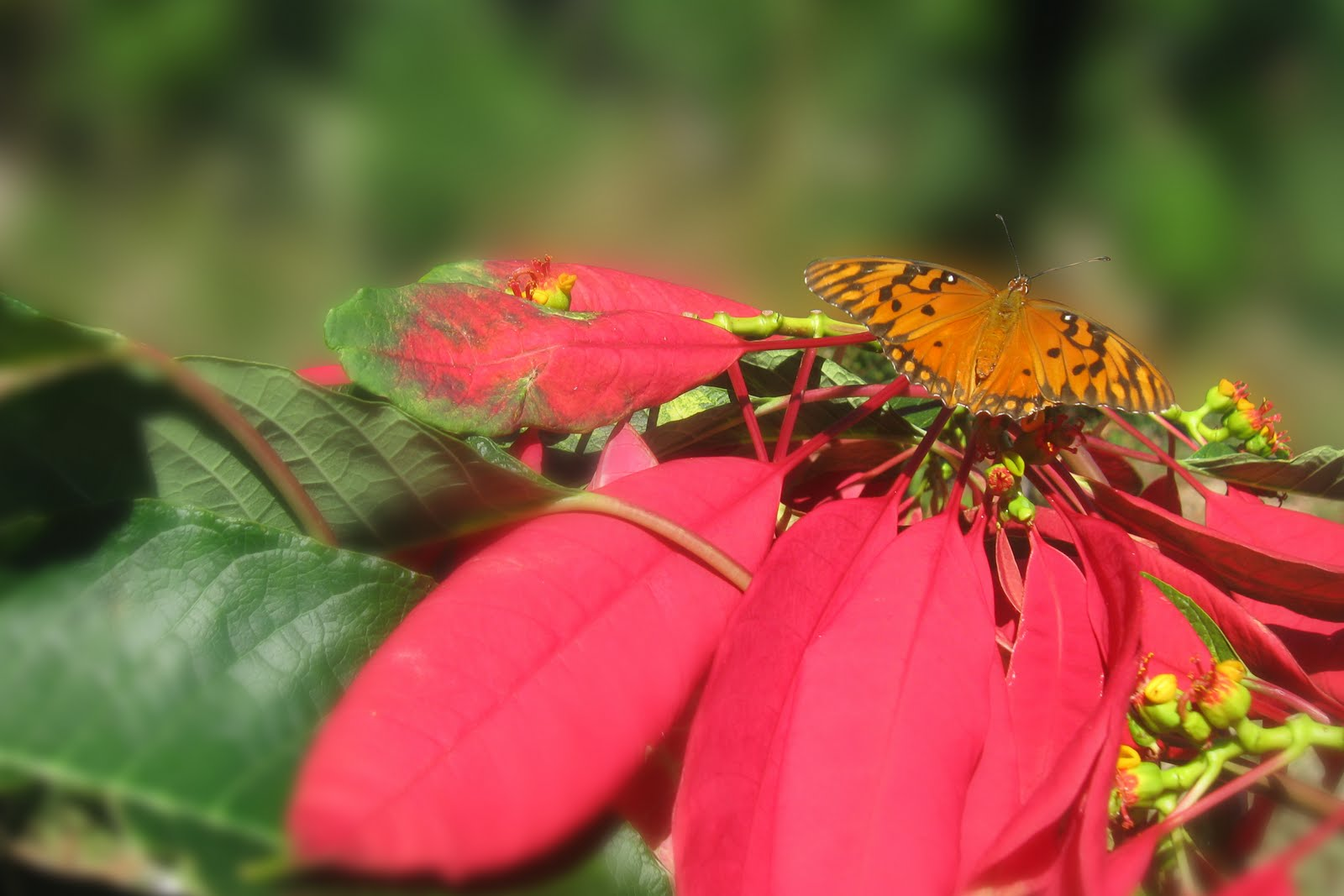 Mariposa Fiel