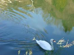 El mito de Leda y el cisne