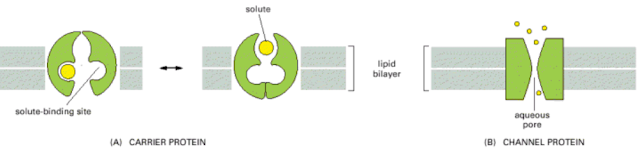 Molecular and Cell Biology: Questions and Answers: #8 ...
