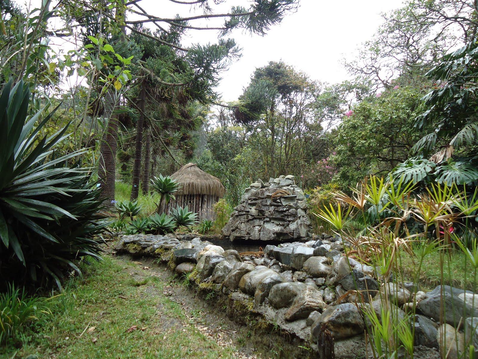 Turismo visita al jard n bot nico for Actividad de perros en el jardin botanico de caguas