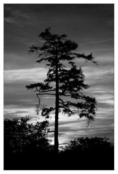 Objectif Image 85 Photographies De Jean Olivier